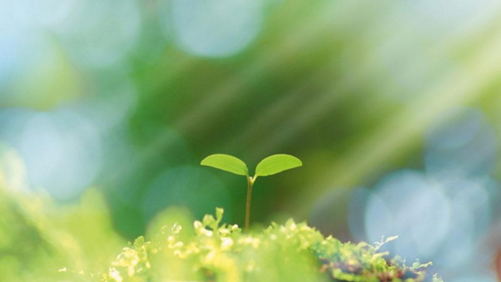 これから成長する新芽